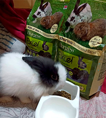 Review of Excel 10 kg Burgess Nuggets with Mint Adult Rabbit Food