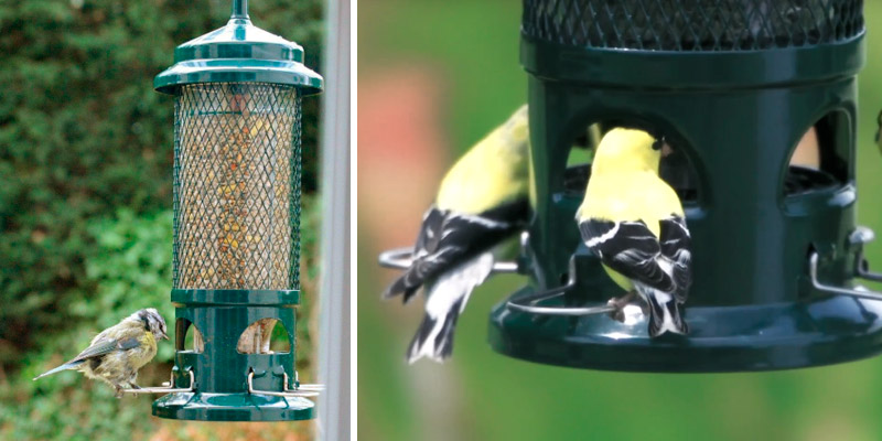 Review of Jacobi Jayne Squirrel Buster Squirrel Proof Bird Feeder
