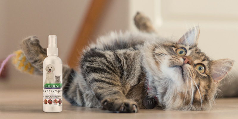 Review of CIDBEST Flea Spray Cat Flea Treatment