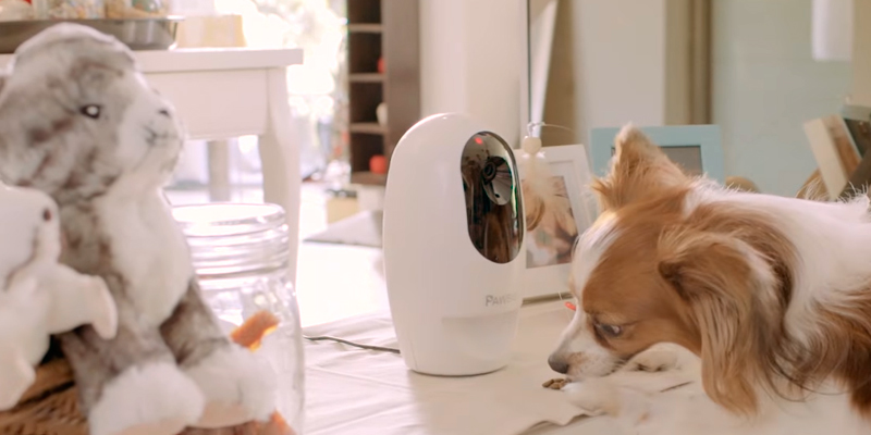 Detailed review of Pawbo PPC-21CL Wi-Fi Pet Camera and Treat Dispenser