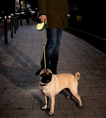 Review of Flexi Neon Retractable Dog Lead