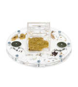 AntHouse Circle Ant Farm Educational Kit Medium with Ants and Queen