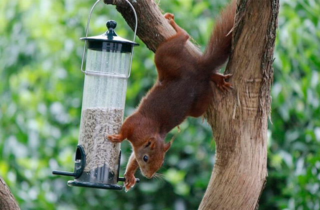 Best Squirrel-Proof Bird Feeders