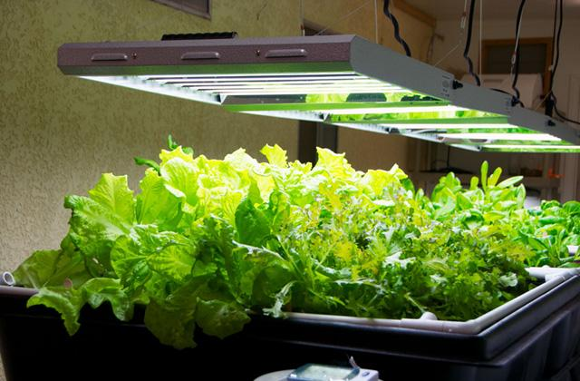 Best Grow Lights to Please Indoor Growers