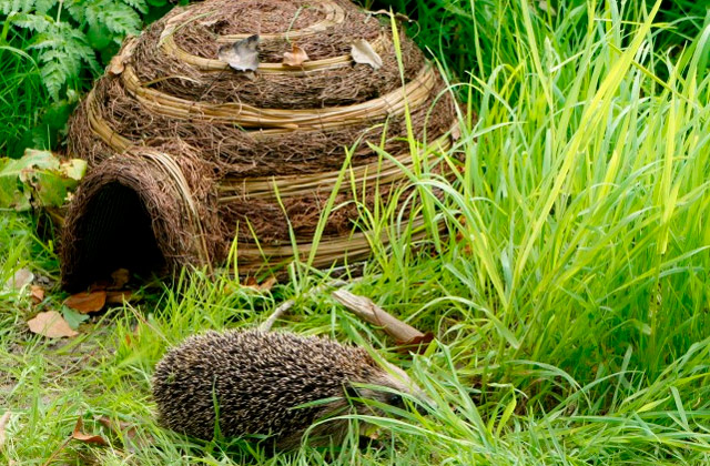 Best Hedgehog Houses for Your Garden