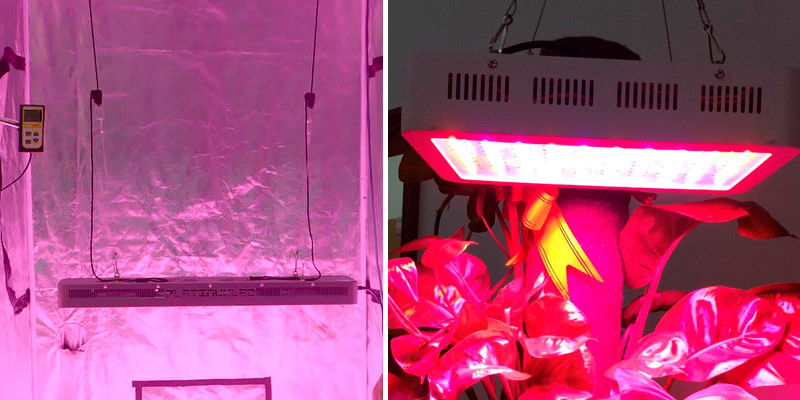 Review of PlatinumLED Grow Lights P600 LED Grow Light