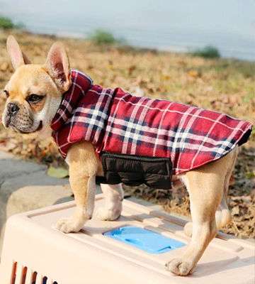 Review of IREENUO Reversible Plaid Dog Coat