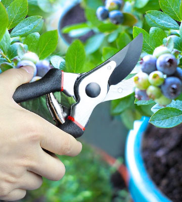 Review of SHINE HAI UK201-BS01-1 Bypass Secateurs