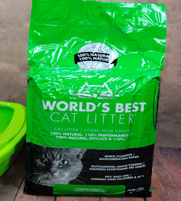 5 Best Cat Litters Reviews Of 2019 In The Uk