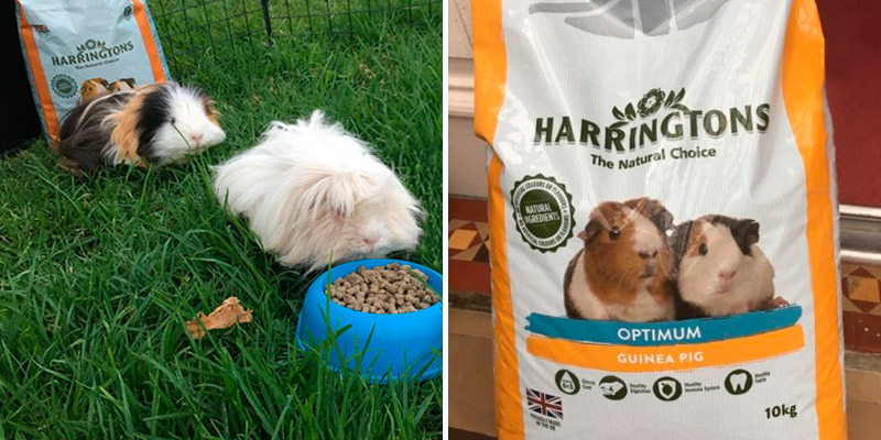 Review of HARRINGTONS Optimum , 10 Kg Guinea Pig Food