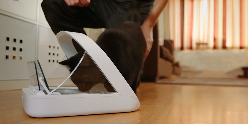 SureFeed Microchip Pet Feeder in the use