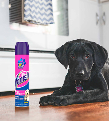 Review of Vanish Carpet Cleaner + Upholstery Pet Expert Foam Shampoo, Large Area Cleaning
