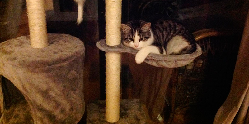 Review of Milo & Misty 12/027 Cat Tree