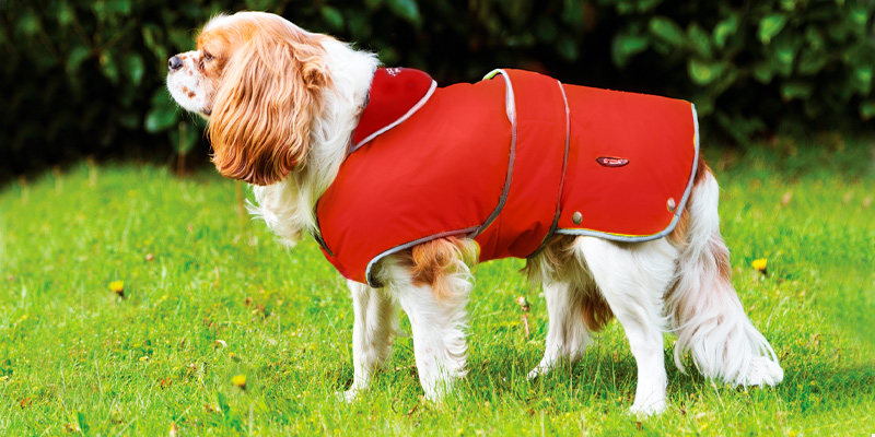 Review of Ancol Muddy Paws Stormguard Dog Coat