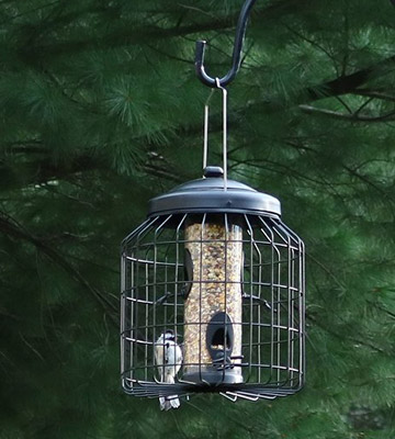 Review of Gardman Squirrel Proof Seed Bird Feeder Heavy Duty