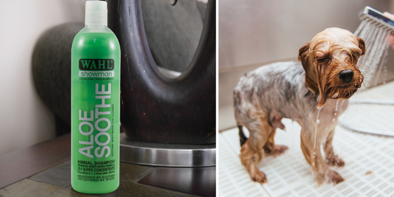 Review of Wahl Aloe Soothe Showman Shampoo for Pets