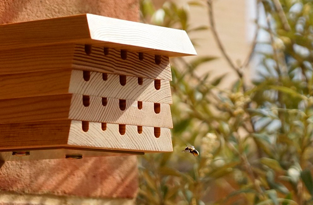 Best Bee Houses