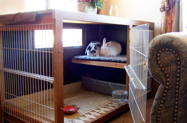 Comparison of Indoor Rabbit Cages