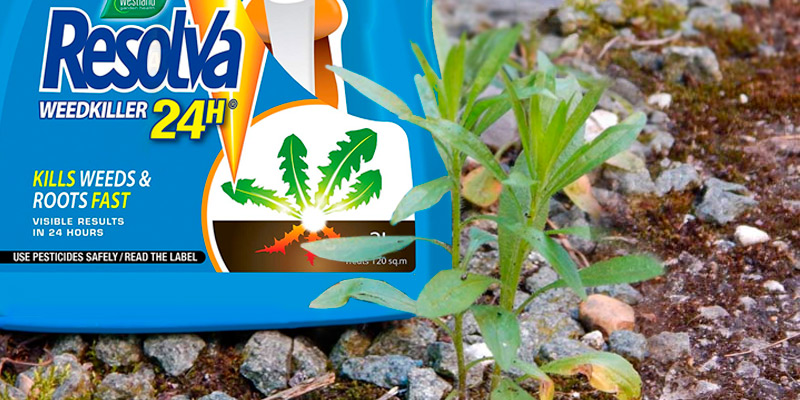 Review of Resolva 24H Weed Killer
