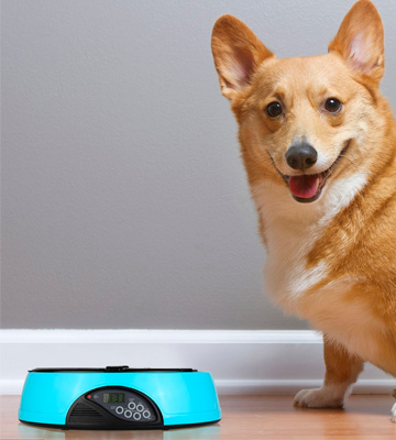 Review of Bunty 6 Day Meal Automatic Pet Feeder