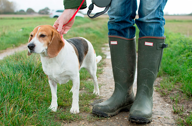 Best Dog Walking Boots