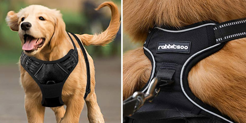 Review of Rabbitgoo DTCW006S No Pull Dog Harness