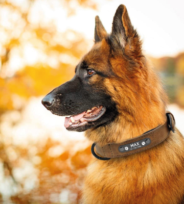Review of Didog Soft Leather Padded Dog Collar with Personalized Nameplate