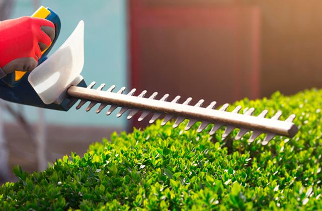 Best Hedge Trimmers to Keep You Hedge Under Control