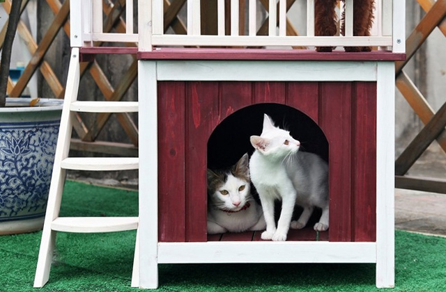 Best Cat Houses for Indoor and Outdoor Use