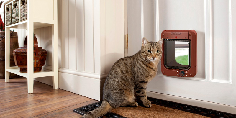 Cat Mate 110413 Microchip Cat Flap in the use