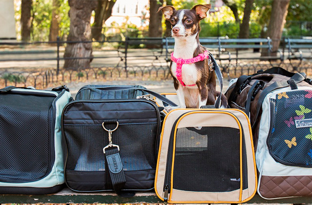 Best Dog Carrier Backpacks