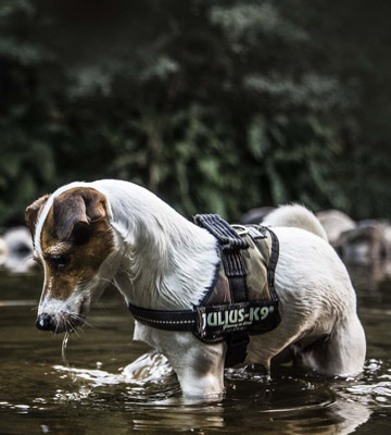 Review of Julius-K9 16IDC-C-M Powerharness