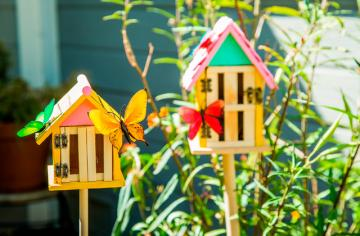 Best Butterfly Houses