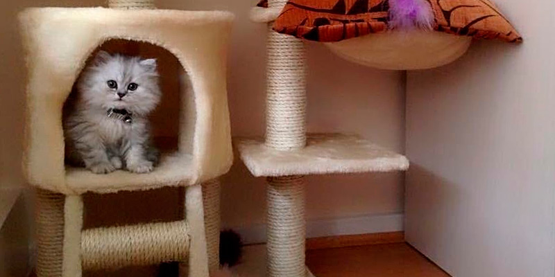 Review of Confidence Pet Deluxe Cat Tree
