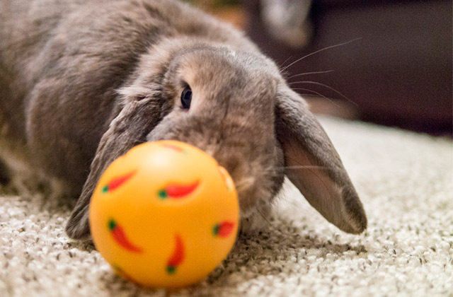 Best Rabbit Toys
