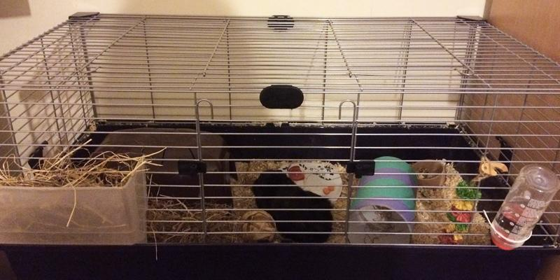 5 Best Rabbit Hutches Reviews Of 2019 In The Uk