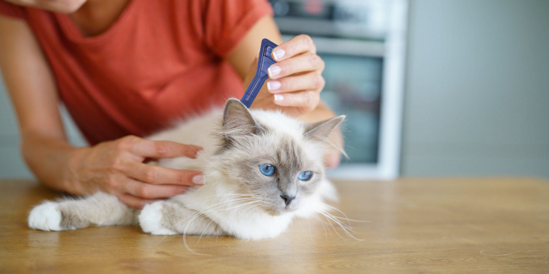 Review of FRONTLINE Spot On Flea & Tick Treatment for Cats